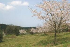 日本小平靈園(樹葬及植存區)
